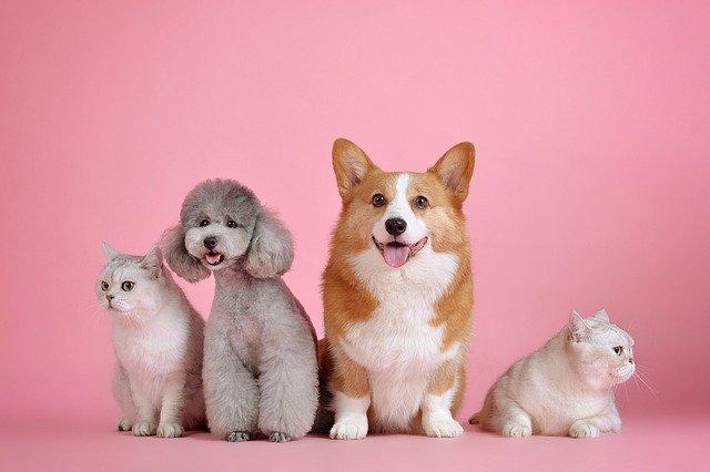 Pes – náš zákazník, náš pán