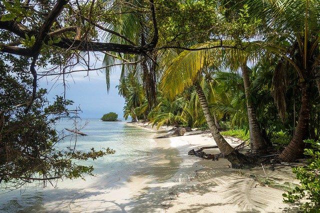 palmy u břehu